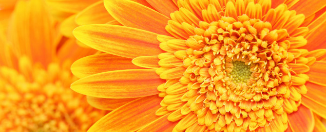 orange-flower-backgrounds-1